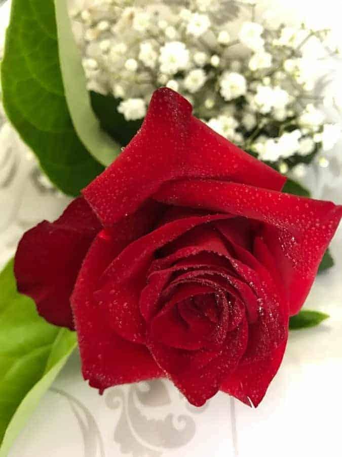 Valentine Single RED Rose Stem