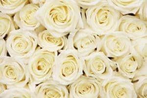 Affordable-Wedding-Flowers-Roses