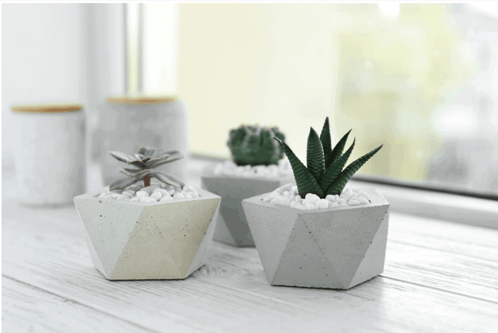 7 Adorable Mini Succulents and How They Benefit Your Well-Being