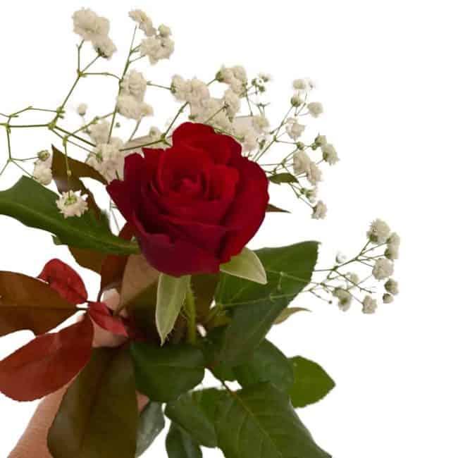 single stem rose