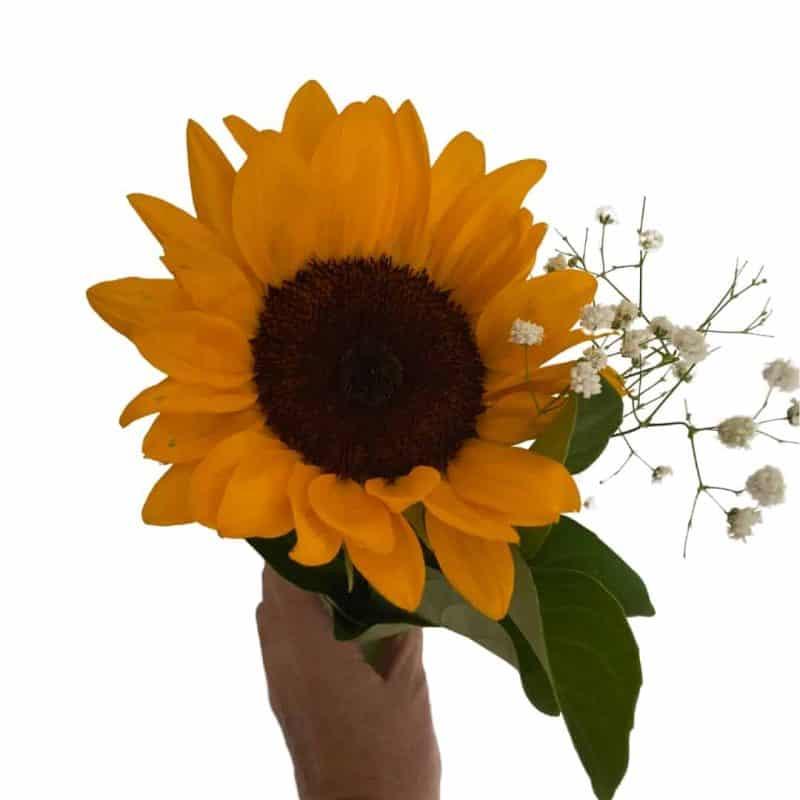 single stem sunflower