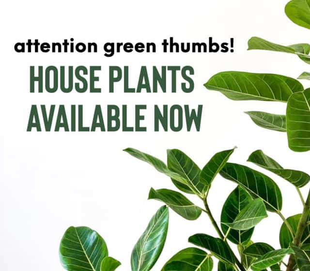 order house plants oline